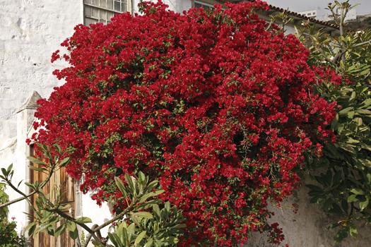 Rincones del atl ntico sumario n mero 6 for Especies de plantas ornamentales